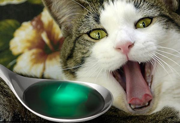Отравление у кота форум