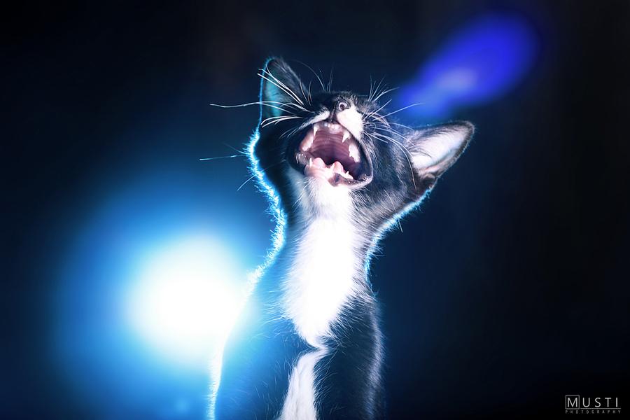 Что такое кастрация котов?