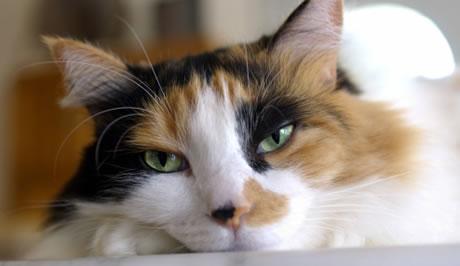 Болезни котов первая помощь