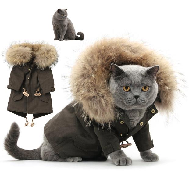 Наряди котов