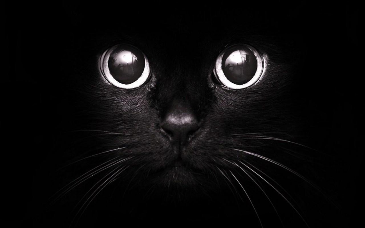 Картинки по запросу черная кошка