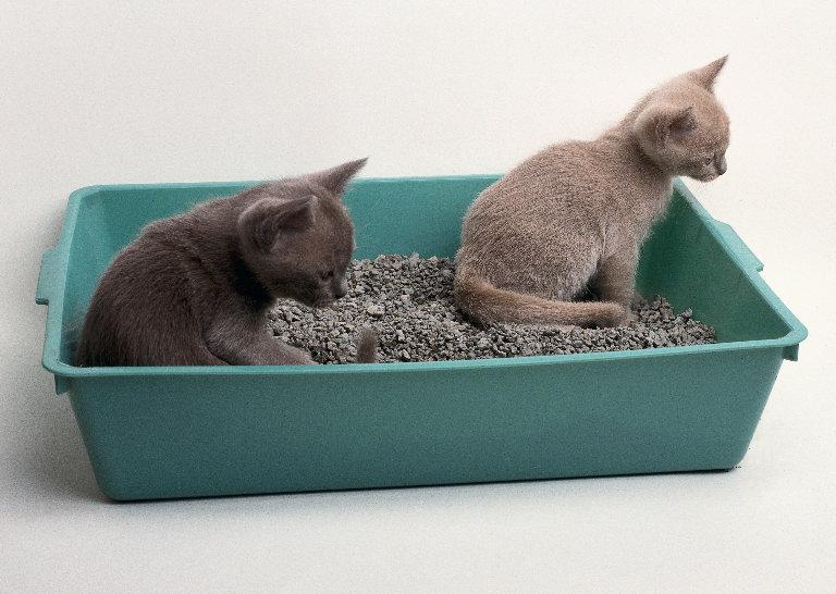 Почему кошка не ест землеройку - fc