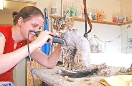 Чем стричь кошку в домашних условиях