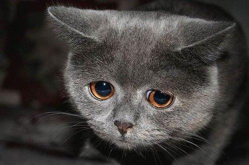 Кастрация котов вред польза