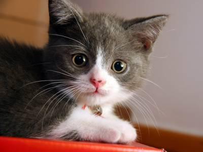 Стерилизация кошек что это такое