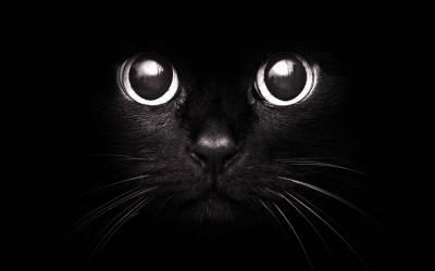 Черный Кот И Черная Кошка