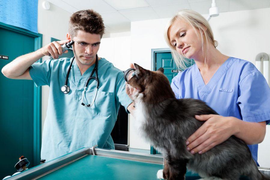 Связи между породами кошек и