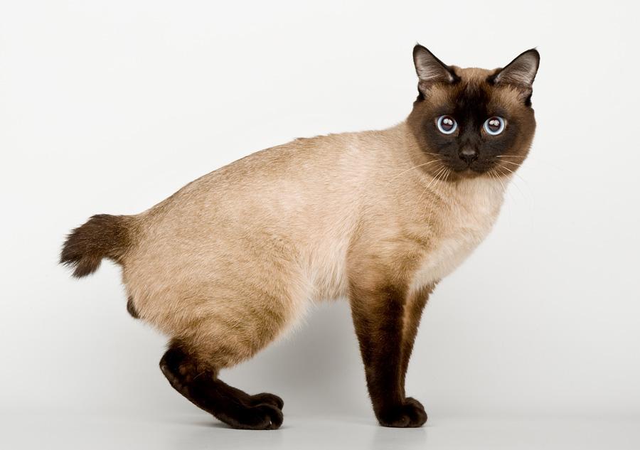 Если у кота хвост крючком