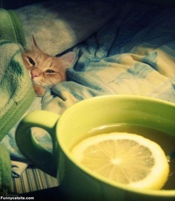 Кошек симптомы лечение и