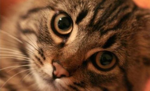Глисты у кошек: виды, симптомы и профилактика