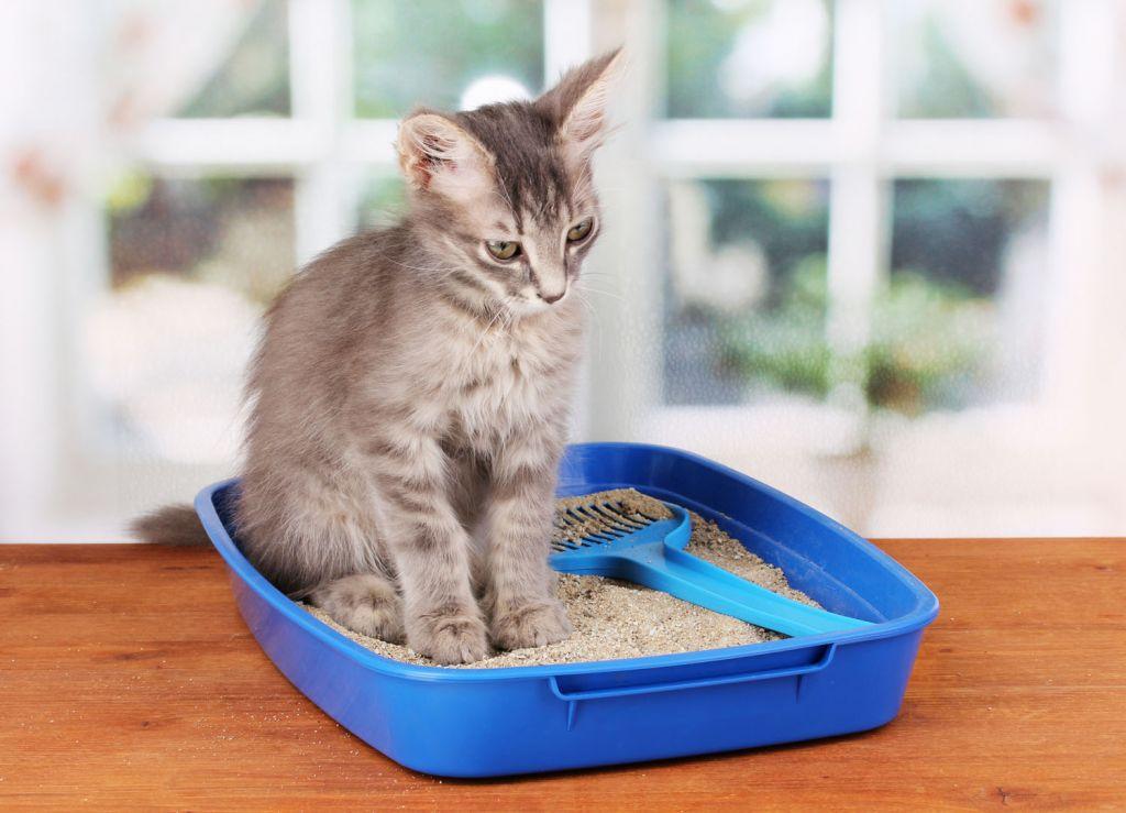 У кошки запор: почему и как лечить?
