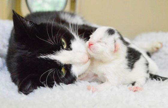 Как кошка чувствует беременность человека