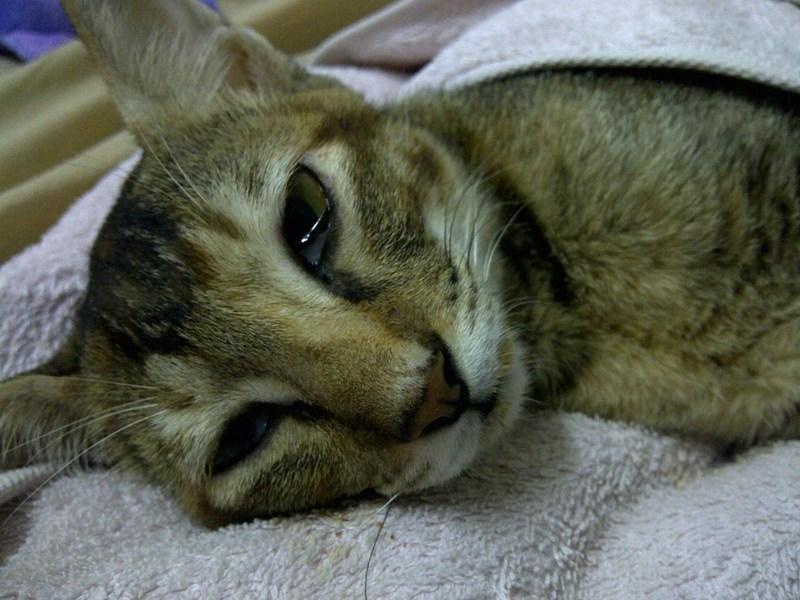 Температура у котов признаки