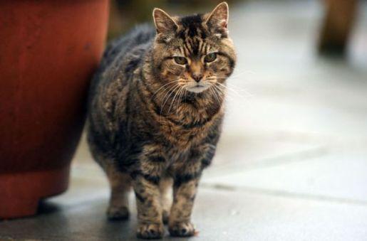 система пожилой кошки не