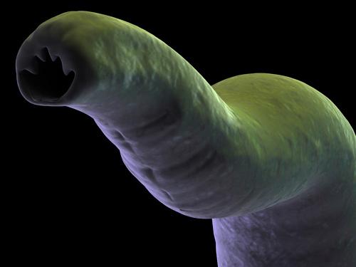 паразиты в организме человека лечение