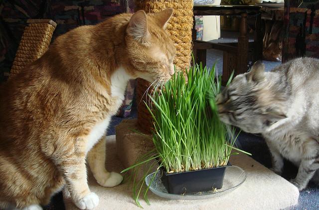 Коту траву какую можно