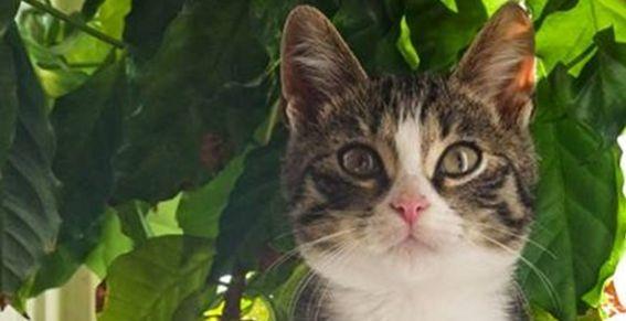 Кот Борис из рекламы «Китекат»
