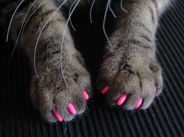 Накладки на когти для кошек: польза или вред?