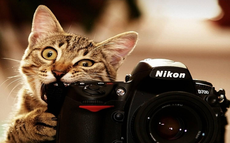 у кошки запах изо рта причины