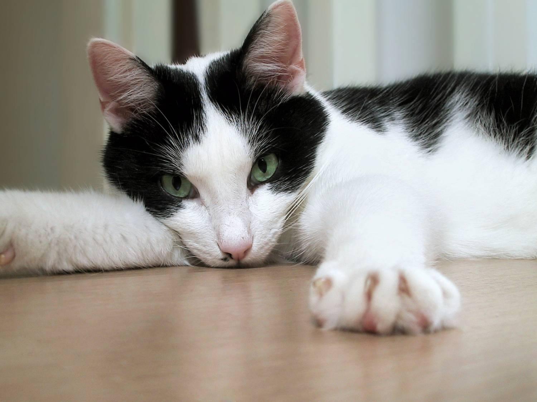 Что делать когда котам жарко