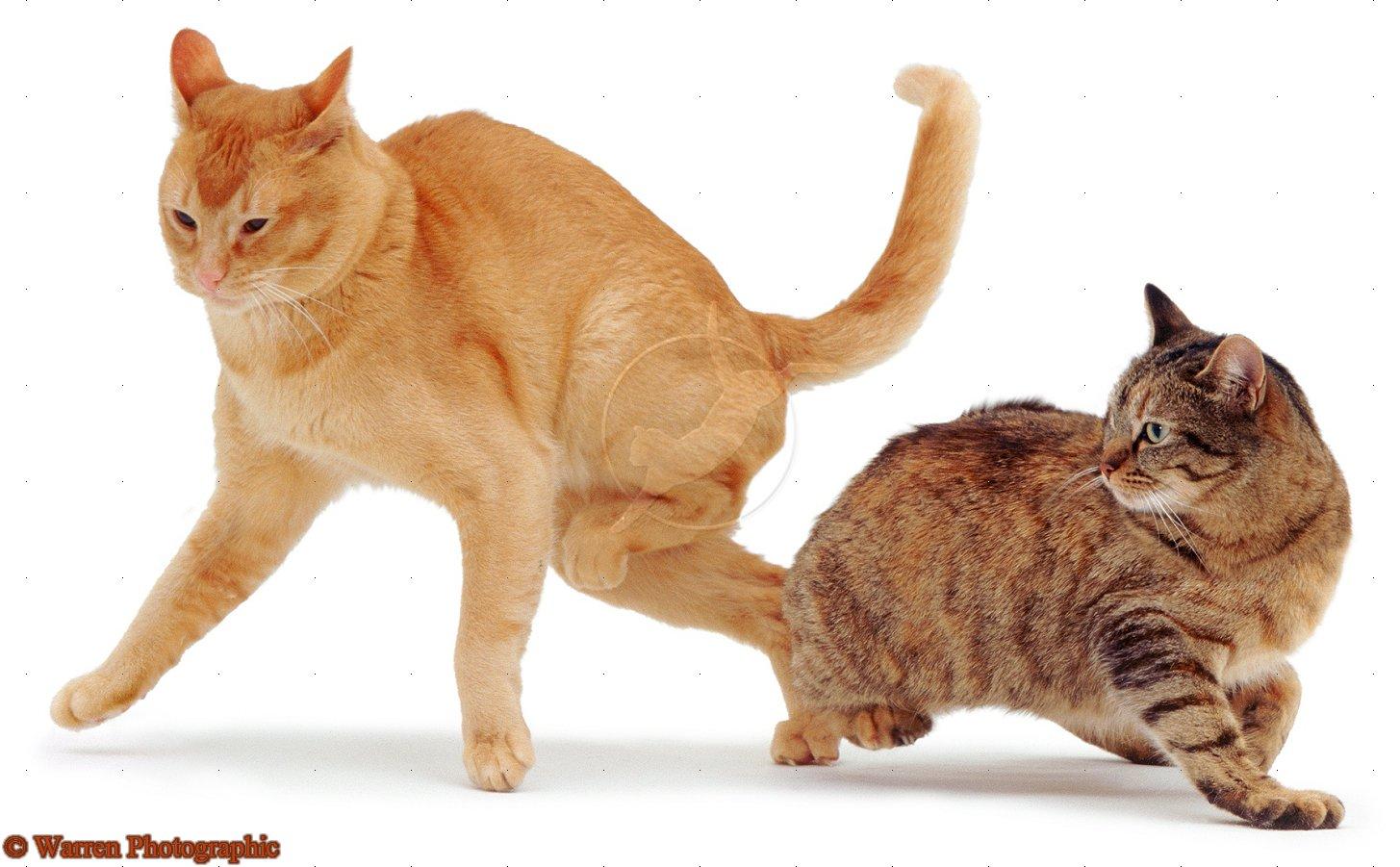 Сношение с котом 12 фотография