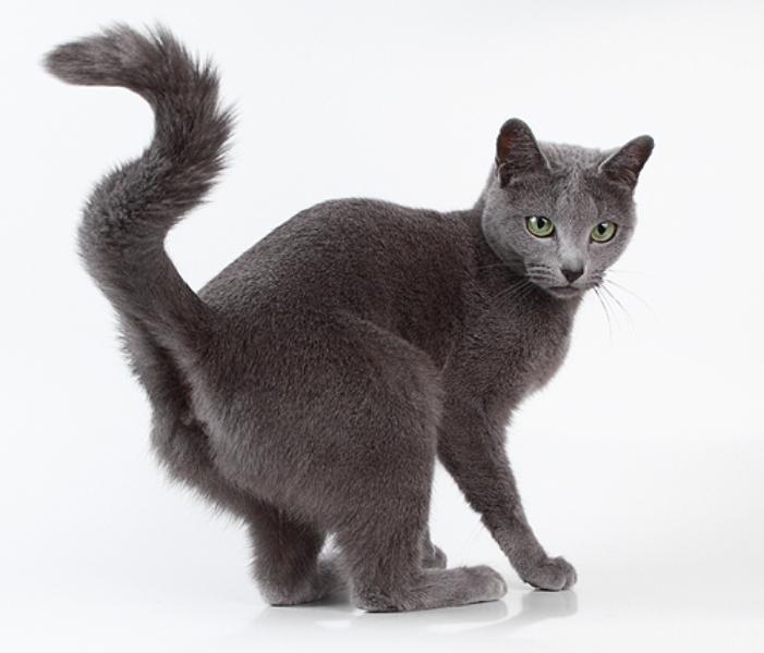 Чужой кот метит территорию
