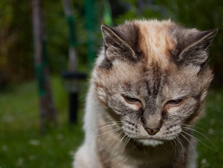 Как ухаживать за старой кошкой?