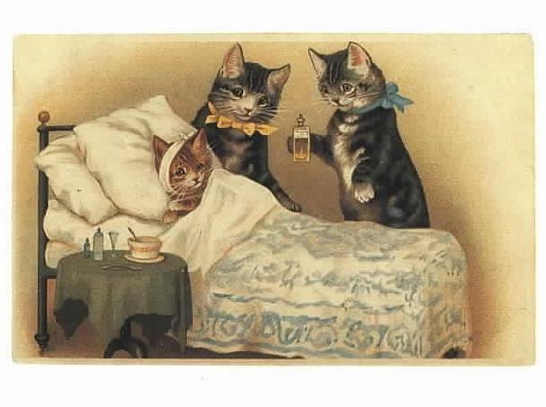 Картинки по запросу коты болеют