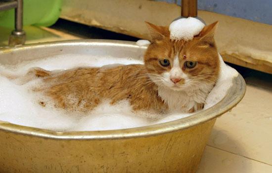 Нужно ли котов мыть