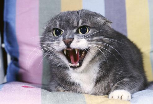 Бешенство у кошек не терпит самодеятельности!