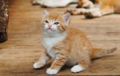 Уход за котенком 2 месяца