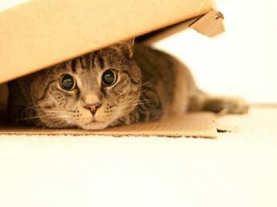 Стресс у кошки симптомы