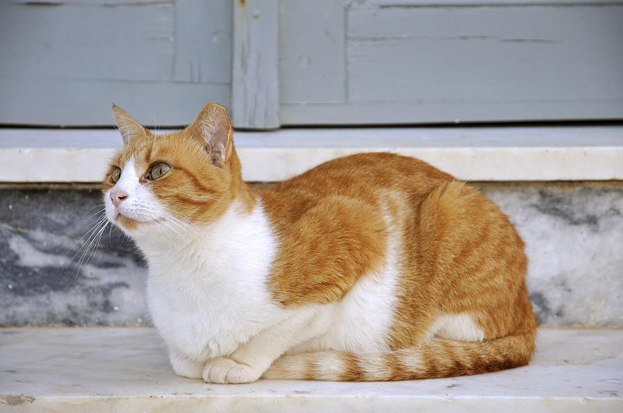 Все породы кошек с фото   murkotecom