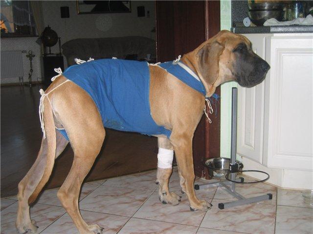 Попона для собаки своими руками после операции