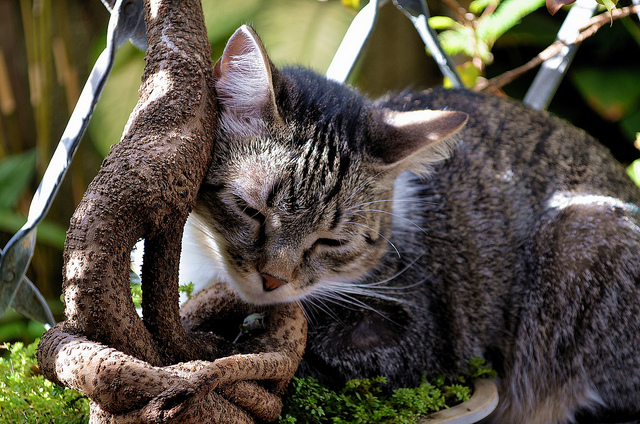 знакомство с факерами порода кошки