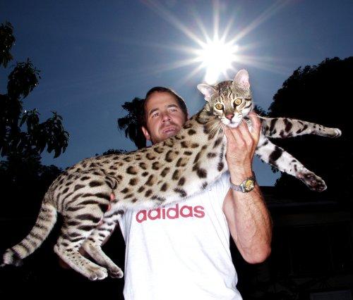 сафари кошка фото