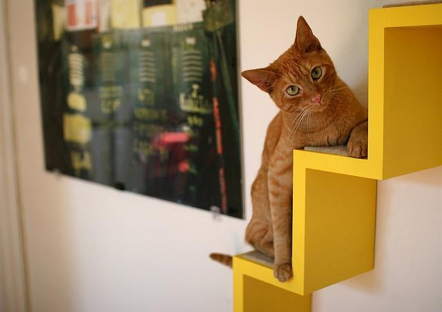 Защищаем жизнь своей кошки во время ремонта: простые правила