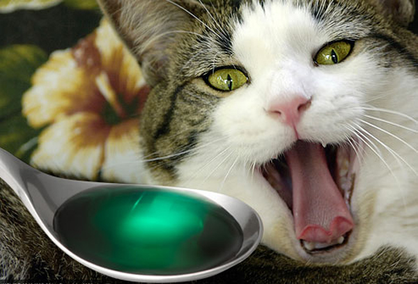 Как прочистить желудок у кота