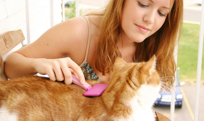 Колтунорез для кошек: виды и способы борьбы с колтунами