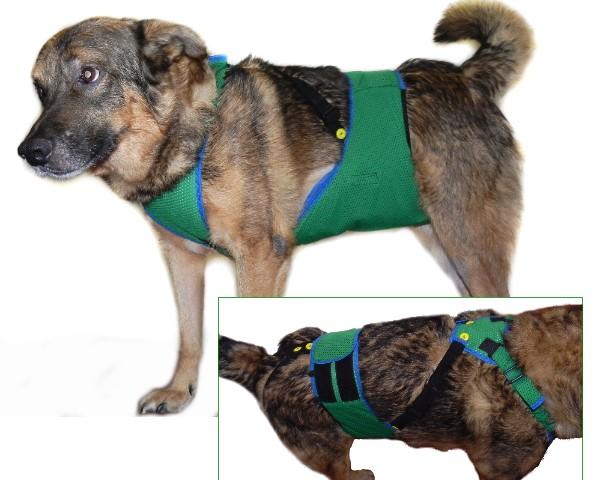 Бандаж для собак своими руками