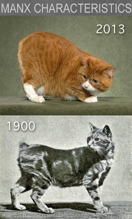 дедовский метод похудения