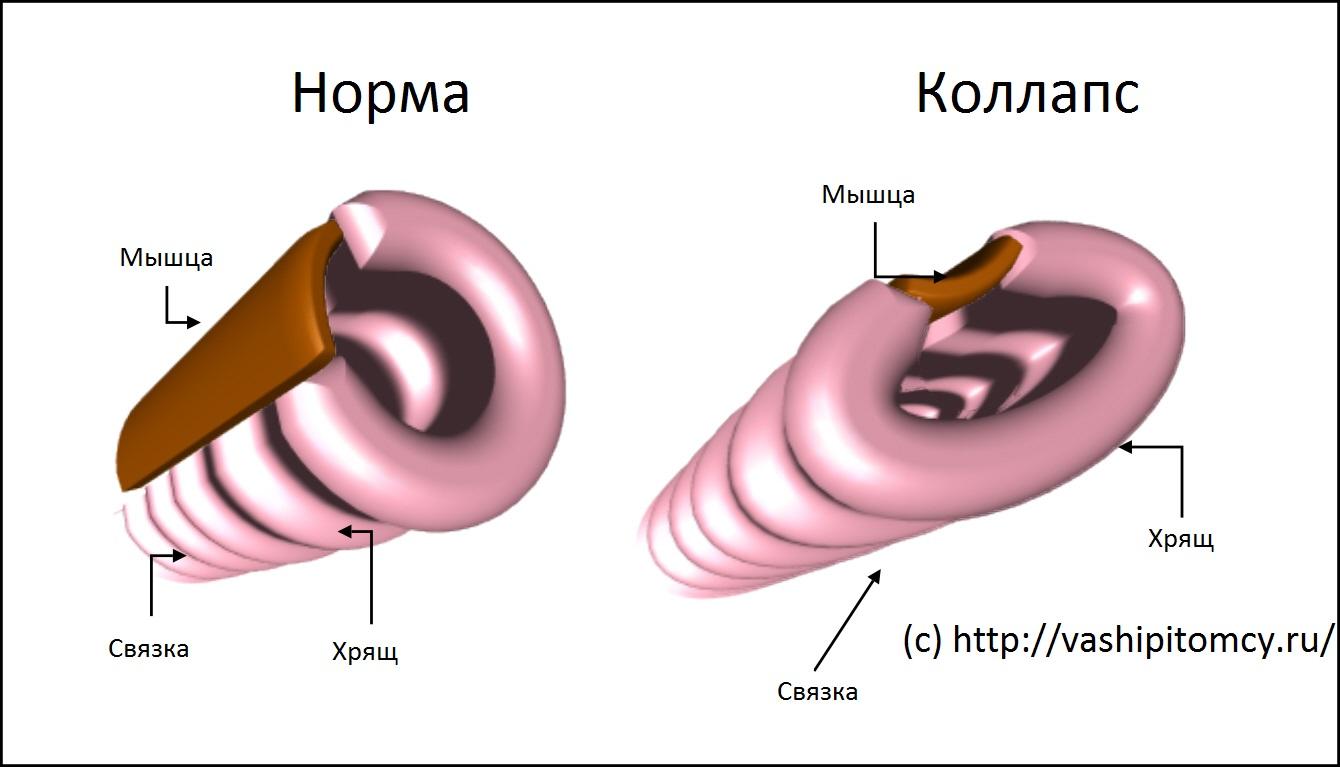 диагностирование паразитов в организме человека