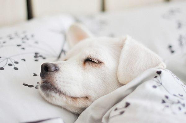 Камеди вумен не можешь не храпеть не спи.