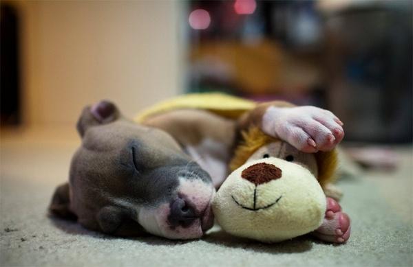 Ребенок храпит во сне астма