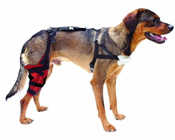 как лечить подвывих коленного сустава у собак