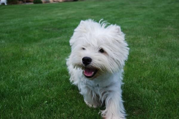аллергия на собаку может пройти