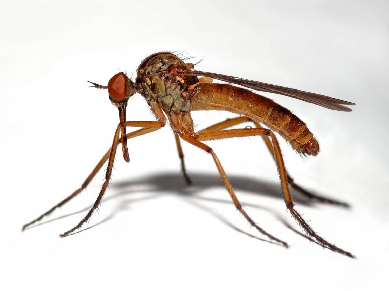 как выходят паразиты из организма