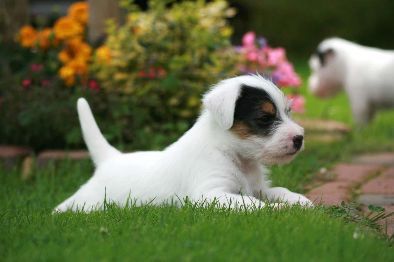породы собак чаще всего вызывающие аллергию у