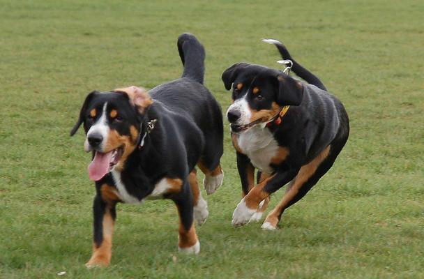 Конура для собаки своими руками видео фото 848