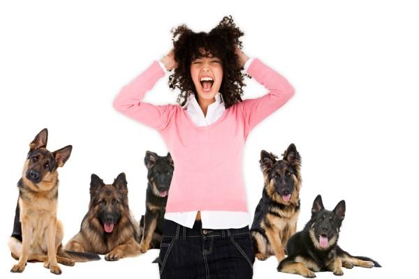 Боязнь собак: норма или патология? Разбираемся в проблеме